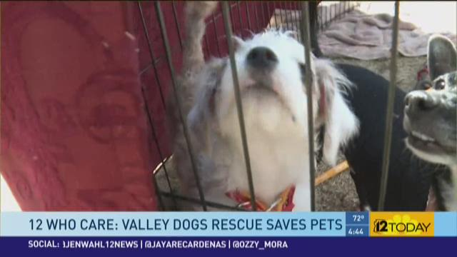 Valley Dogs Resuce