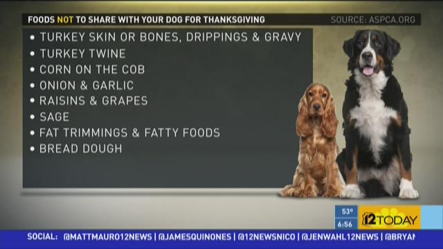 10 Thanksgiving foods your dog shouldn't eat