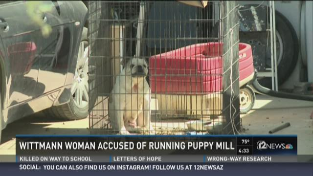 Wittmann woman accused of running puppy mill