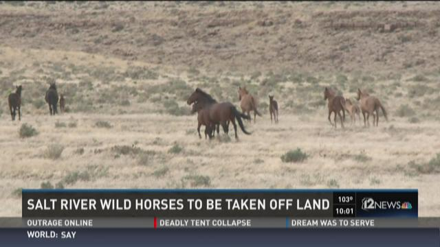 Salt River wild horses to be removed, could face death