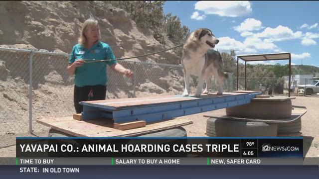 Yavapai County- Animal hoarding cases triple